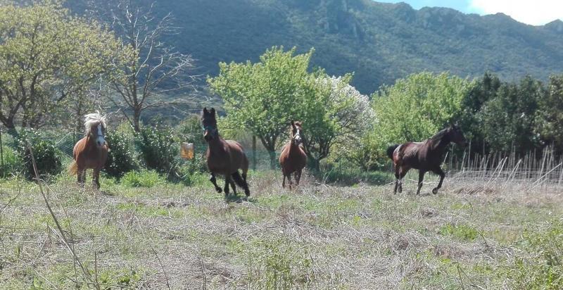 Calendario Fise Lazio.Passeggiata A Cavallo Lazio Regali 24